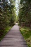 Corso di fasciame attraverso la foresta fotografia stock libera da diritti