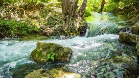 Corso rapido del fiume della montagna, intorno alla foresta archivi video