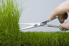 Cortacéspedes y hierba natural Foto de archivo libre de regalías