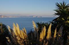 Cortaderia的布什和那不勒斯海湾  库存照片