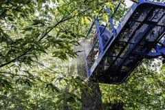 Cortador da árvore Fotografia de Stock Royalty Free