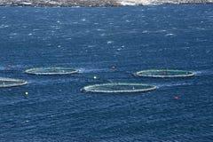 Cortador da pesca Fotos de Stock Royalty Free