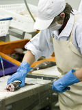 Cortador de sexo femenino de los pescados en la acción Foto de archivo libre de regalías