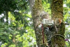 Cortador del árbol Fotos de archivo