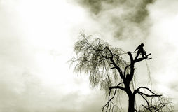 Cortador del árbol Fotos de archivo libres de regalías