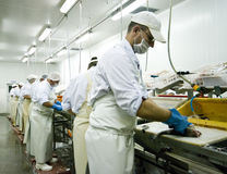 Cortadores dos peixes no trabalho foto de stock