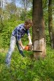 Cortando a árvore inoperante Imagem de Stock