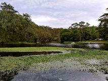 Cortando o parque nacional real do rio @, Sydney imagens de stock