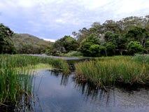Cortando o parque nacional real do rio @, Sydney foto de stock