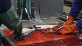 Cortando peixes frescos filme
