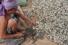 Cortando peixes pequenos Imagens de Stock