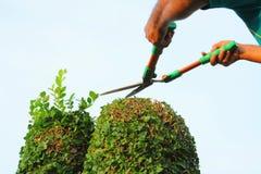Cortando a árvore Imagem de Stock Royalty Free