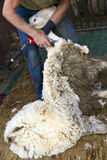 Cortando um carneiro fotografia de stock