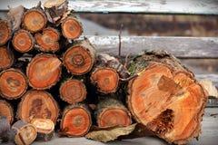Corte a árvore Imagem de Stock