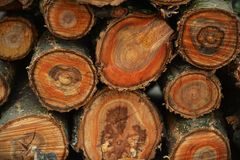 Corte a árvore Imagens de Stock Royalty Free