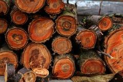 Corte a árvore Imagens de Stock