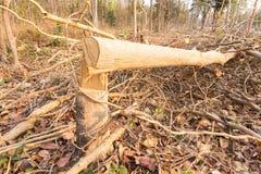 Corte a árvore Fotografia de Stock Royalty Free