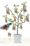Corte a árvore do dinheiro Imagens de Stock Royalty Free
