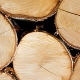 Corte árvores Foto de Stock Royalty Free