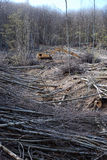 Corte árvores em uma floresta Imagem de Stock