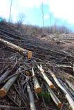 Corte árvores em uma floresta Fotografia de Stock Royalty Free