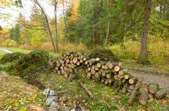 Corte árvores na floresta Fotografia de Stock