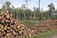 Corte árvores no fundo da natureza Fotos de Stock