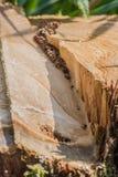 Corte áspero el tocón de árbol Foto de archivo