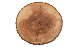 Corte anéis de crescimento da árvore Imagem de Stock