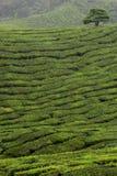 Corte arbustos com árvore Fotos de Stock