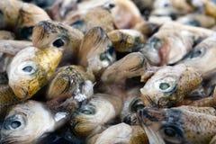 Corte as cabeças dos peixes Imagens de Stock