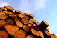 Corte blocos de madeira Foto de Stock Royalty Free