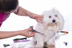 Corte canino del pelo Imagen de archivo libre de regalías