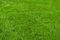 Corte cuidadosamente la hierba Foto de archivo