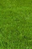 Corte cuidadosamente la hierba Fotografía de archivo libre de regalías