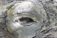 Corte curado de um ramo da árvore plana imagens de stock royalty free
