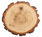 Corte da árvore Fotos de Stock