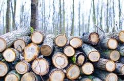 Corte da árvore Imagens de Stock