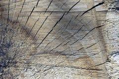 Corte da árvore através da serra de cadeia Imagem de Stock