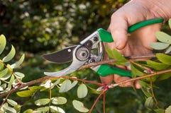 Corte da árvore com secateurs no jardim enorme imagens de stock royalty free