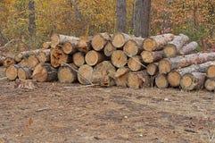 Corte de árboles Imágenes de archivo libres de regalías