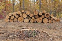 Corte de árboles Foto de archivo libre de regalías
