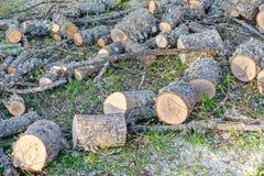 Corte de comprimento logs da lenha Imagens de Stock