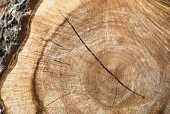 Corte de la madera Foto de archivo