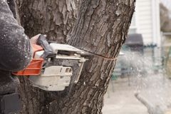 Corte de la motosierra en árbol Imágenes de archivo libres de regalías