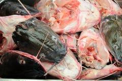 Corte de las pistas de los pescados Fotografía de archivo