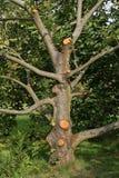 Corte de los árboles fotografía de archivo libre de regalías