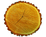 Corte de madeira coberto com as rachaduras Imagem de Stock
