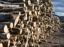 Corte de madeira e empilhado na fábrica fotografia de stock