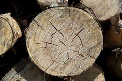 Corte de madera del registro Imagenes de archivo